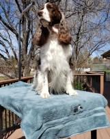 grooming towel 2