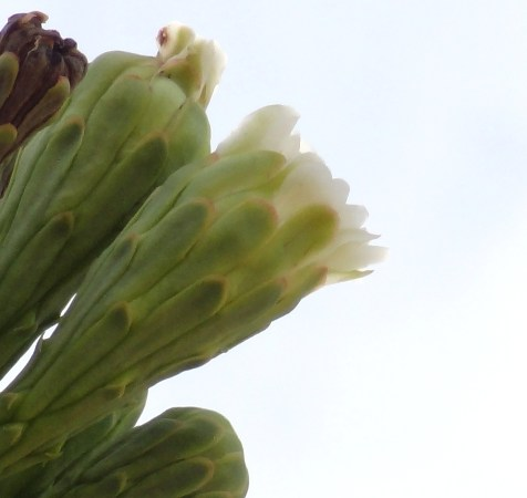 2014 Spring Blossom