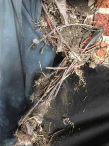 Birds nest removed from chimney