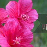 Crepe Paper Hibiscus Flower Tutorial
