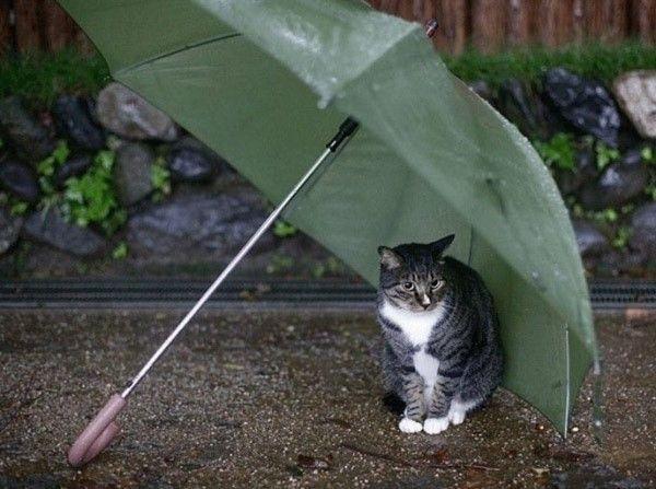 Gato bajo tormenta