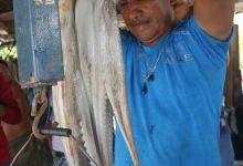 Foto de Proponen ampliar temporada de pulpo en Yucatán; a la espera que Conapesca dé respuesta