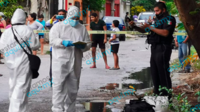 Foto de Cerdo asesina a su dueño en Ciudad del Carmen