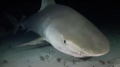 Foto de Tiburón luminoso en el Triángulo de las Bermudas
