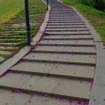 Estancia – Walking Paths