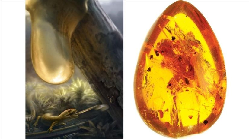 On the left, an artistic recreation of a 'Yaksha perettii'.  On the right, the specimen found in amber