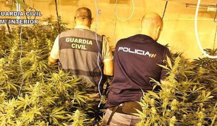 Macrooperación policial contra el cultivo de marihuana en Alzira, Alberic y  Benimuslem - Levante-EMV