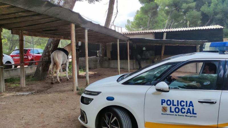 Das Pferd kommt vorerst auf einem Bauernhof unter.