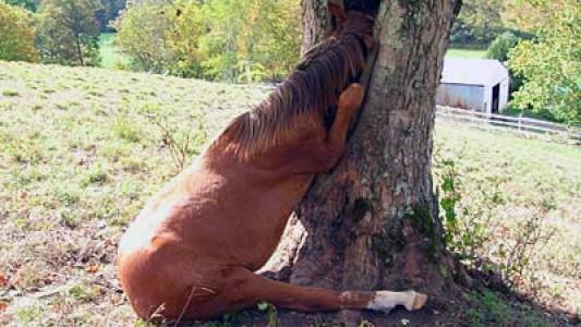 Un caballo en un árbol