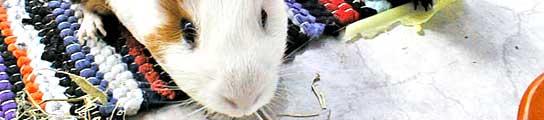Las cobayas dejarán de ser las víctimas de los experimentos farmacológicos  (Imagen: 20MINUTOS.ES)
