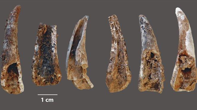 Los neandertales explotaban el mar al igual que los sapiens, Periódico San Juan