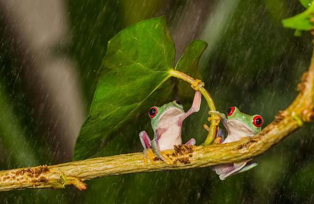 animales-y-sus-paraguas-naturales-8