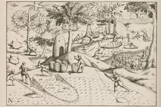 La llegada de la expedición del almirante Jacob Cornelissoon van Neck (c 1564-1638) que llegó a Mauricio en 1598 fue el principio del fin para el dodo.