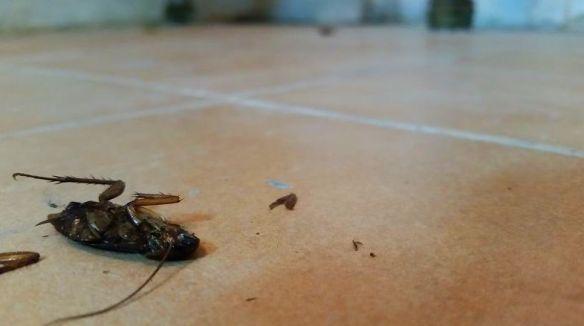 se acabo el verano y las cucarachas disminullen