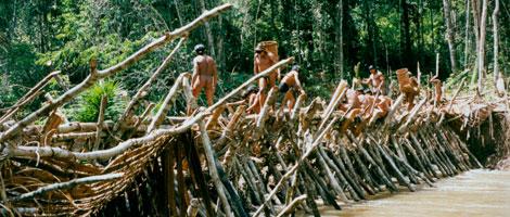 Presa realizada por los indígenas en la Amazonía. | Survival