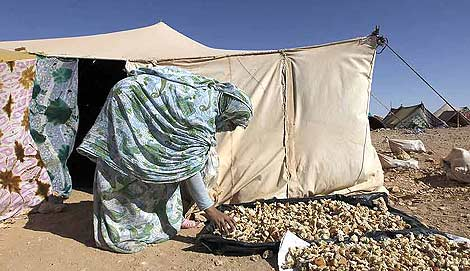 Una mujer saharaui recoge pan en el campamento. | Reuters