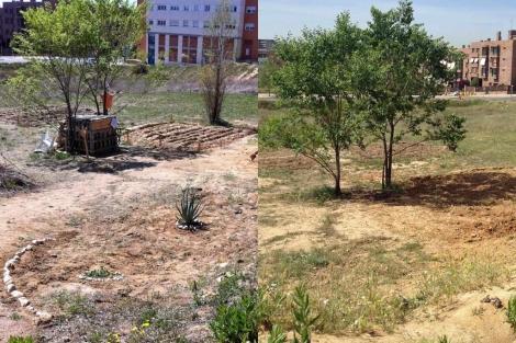 El huerto, antes (izda.) y después de la actuación del Ayuntamiento.