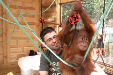 Pablo Herreros, jugando con un colega orangután. | El Mundo