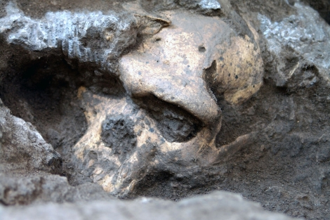 El fósil del cráneo fue desenterrado en 2005 en Dmanisi, Georgia.  Museo Nacional de Georgia.