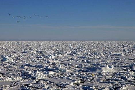 Capa de Hielo del Océano Glaciar Ártico. | M. Vidal/CSIC