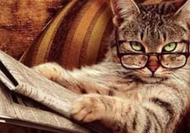 cat_news-370x260