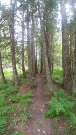 Wetland Creekside Trail.jpg.web
