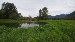Wetland view pond.jpg.web