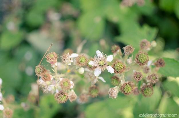 Balade champ de blé 220614 - Estelle R Photographie - Photographe Mariage et Lifestyle Haute saône, Vosges, Lorraine; Franche Comté-74