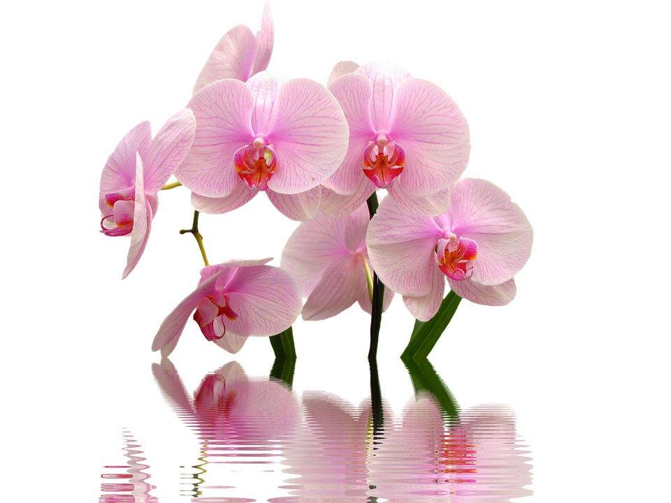 estetica-sensazioni-orchidea-donatella-semeraro