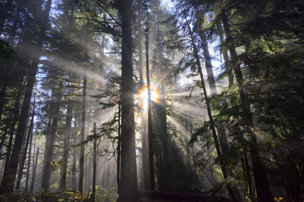 Sunlight streaming through the trees | What to Do When the Tears Keep Falling: 5 Ways to Cope as a Mom