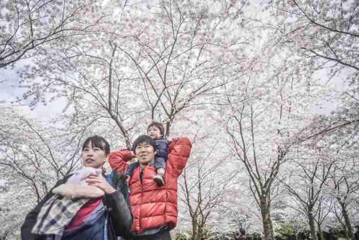 Sakura festival Amstelveen kl