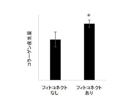 シソ科植物由来成分フィトコネクトによるコラーゲン産生促進効果