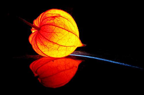 Natural Lampion, by Thomas Reichart