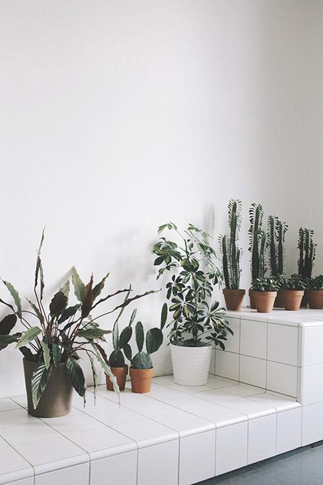 decoracion-blanco+plantas-07