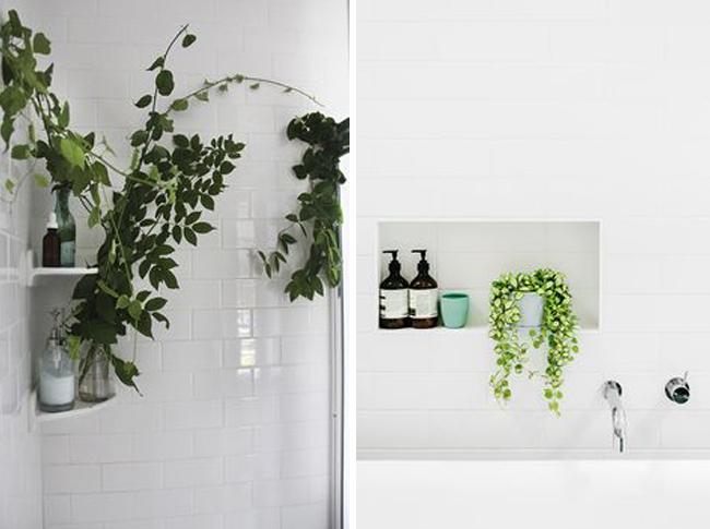 plantas-en-el-baño-14
