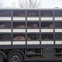 Camion încărcat cu circa 200 de porci, blocat de sâmbătă în vama Albița. ACEBOP a cerut intervenția urgentă a ministrului Agriculturii