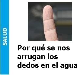 por_que_se_nos_arrugan_los_dedos_en_el_agua_Portada