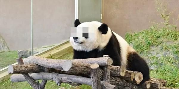 MNPを考えるパンダ