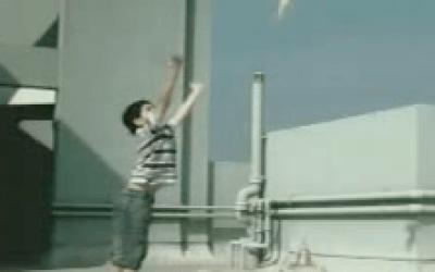 Pájaro – WWF