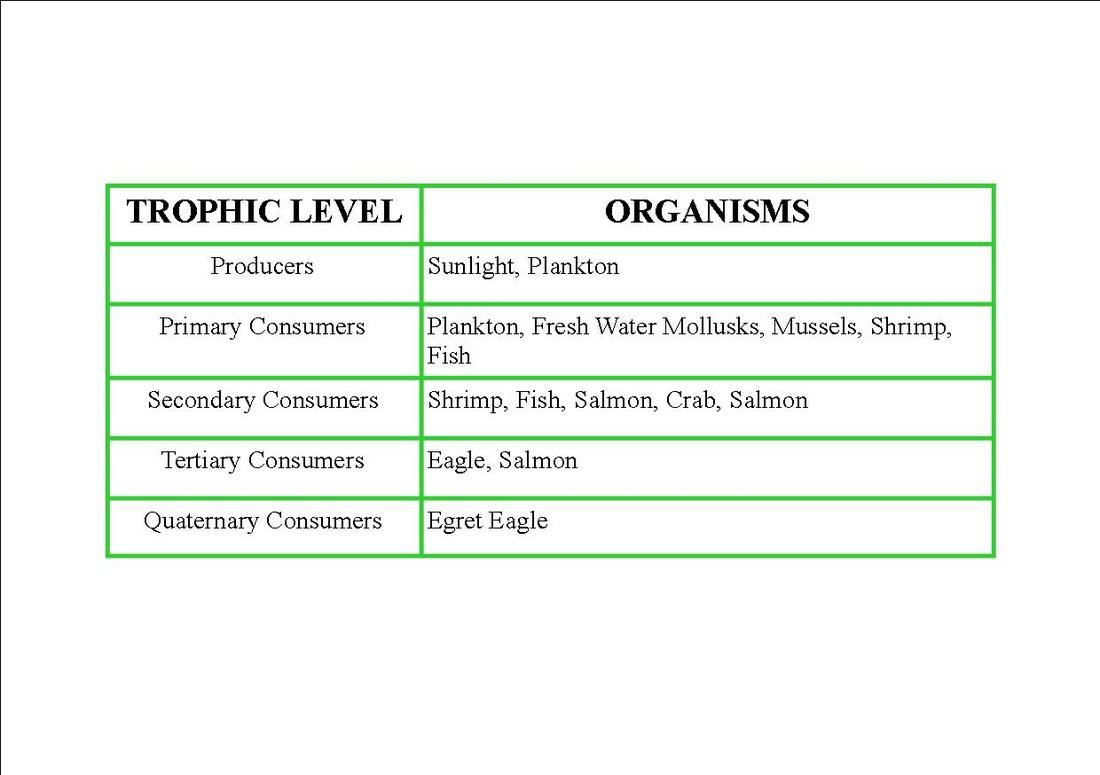Food Web Energy Pyramid Amp Trophic Table