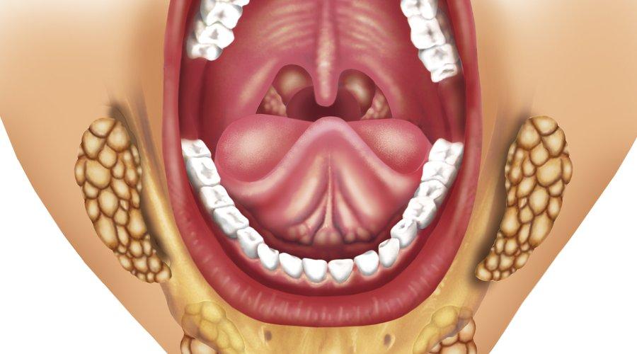 Qué es la glándula sublingual y cuál es su función? - Estudi Dental ...