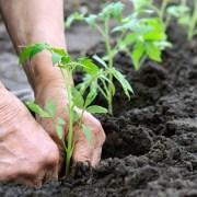 reforma da previdencia rural