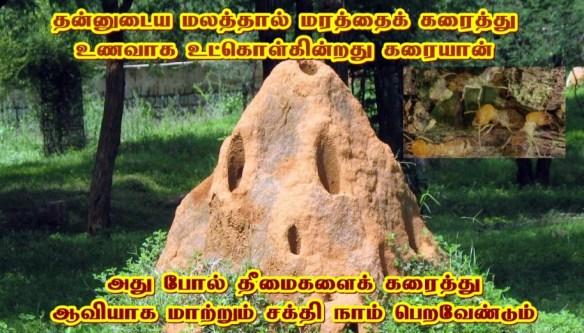 karaiyan-_-termites