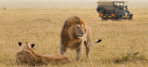 Image result for Track Lions on Foot in Kenya