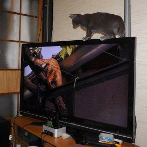 オーリオv.s.岩合光昭の世界ネコ歩き