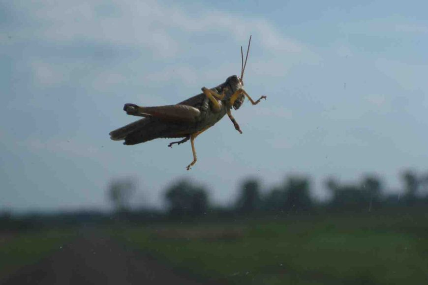 grasshopper in holla bend wildlife refuge