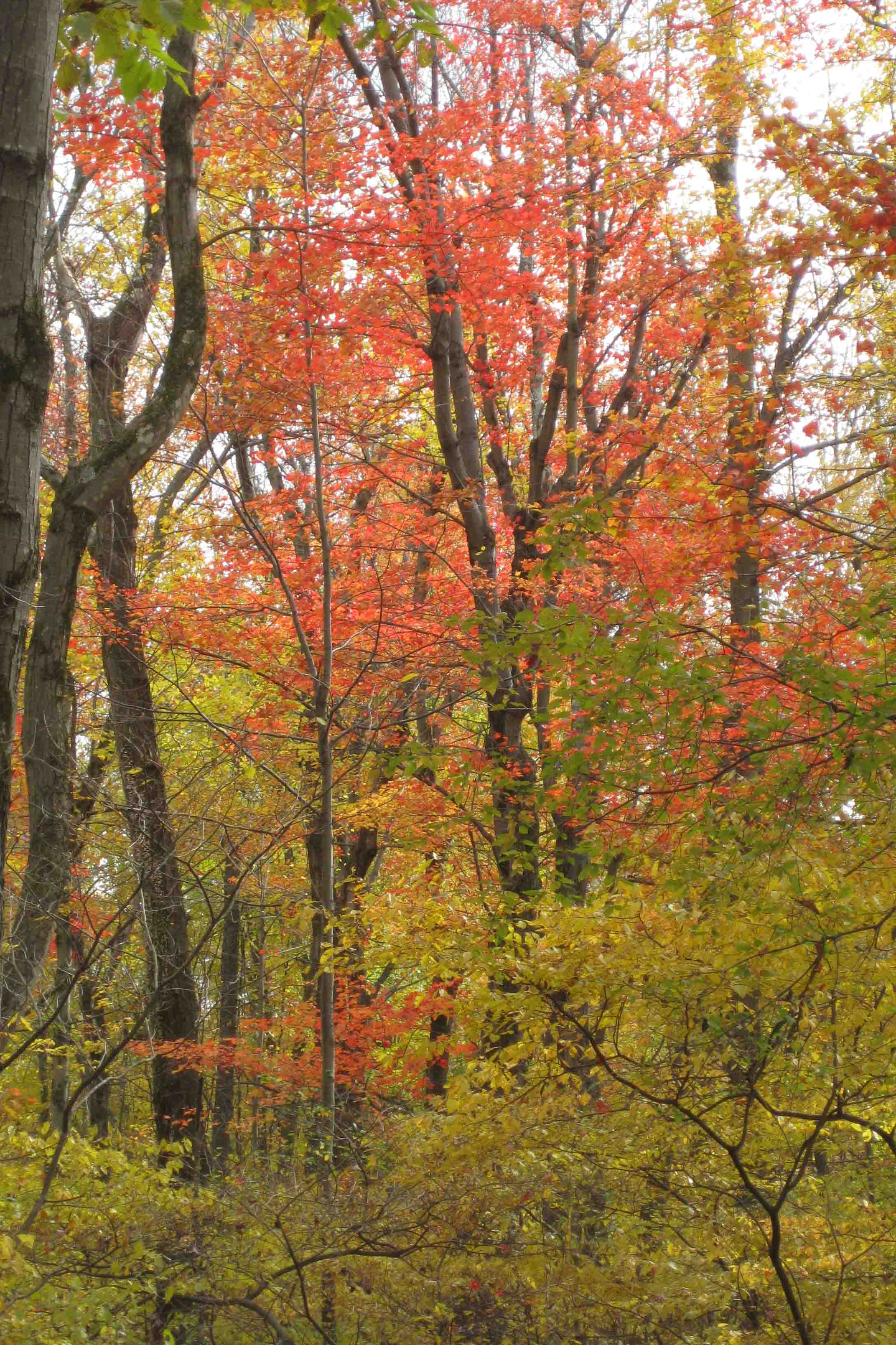 fall foliage at Topsmead state forest