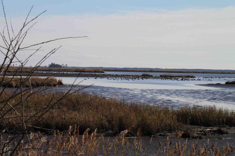 blackwater national wildlife refuge in Maryland