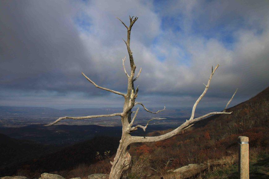 Appalachian Trail Marker in Shenandoah National Park