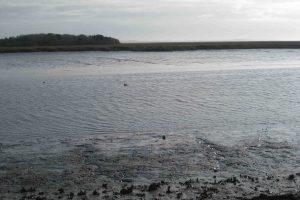 marshes of glynn overlook park
